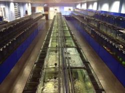 AQUASCAPE FISH IMPORTS - Aquatic Livestock Wholesaler