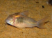 AQUASCAPE FISH IMPORTS - Aquatic Livestock Wholesaler